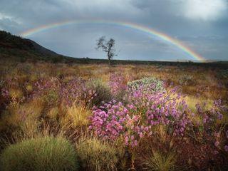 Istock paulmorton rainbow